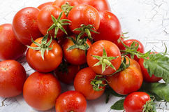 Tomatengroep Stock Foto's
