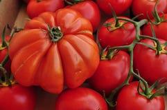 Tomatenmalen Lizenzfreie Stockfotos