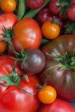 Tomatenoogst Stock Afbeeldingen