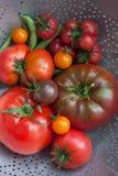 Tomatenoogst van erfgoedtomaten in een vergiet Royalty-vrije Stock Foto