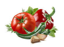 Tomatenpfefferpaprikaknoblauchbasilikum-Dillsatz lokalisiert Stockfoto