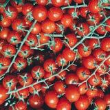 Tomatenstammen, vele tomaten, rode glanzende vers royalty-vrije stock foto