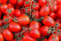 Tomatenstapel Stock Foto's