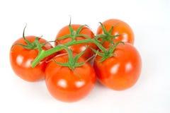 Tomatenstruik stock foto
