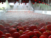 Tomatenverarbeitung Stockbilder