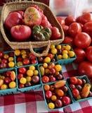 Tomater Royaltyfria Foton