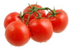 tomater Royaltyfri Bild