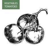 Tomater Arkivfoton
