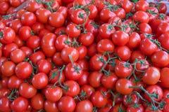 tomater Royaltyfri Fotografi