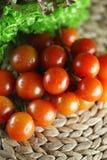 Tomater Arkivbilder