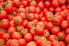 Tomater Arkivfoto