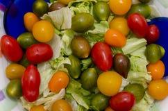 Tomater av många färger Royaltyfria Bilder
