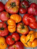 Tomater av olika variationer och färger royaltyfri foto
