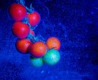 Tomater bevattnar in Arkivbild