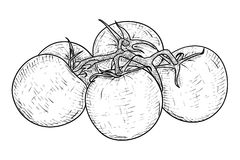 Tomater Den tecknade handen skissar vektor illustrationer
