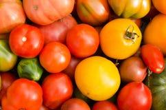 tomater för bakgrundsmatserie Royaltyfri Bild