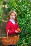 Tomater för plockning för bondeungeflicka arkivfoto