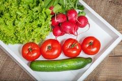 Tomater, gurkor, rädisor och grönsallat Ingredienser för cooki arkivbilder