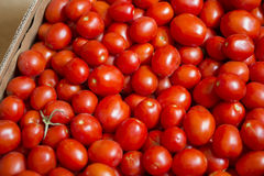 Tomater i en ask arkivbild