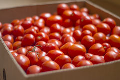 Tomater i en ask royaltyfri fotografi