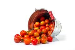 Tomater i en hink Arkivfoto