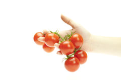 Tomater i hand Arkivfoto