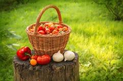 Tomater i korg, lök och peppar på stubbe i trädgård Royaltyfri Fotografi