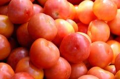 Tomater i verklig marknad Royaltyfri Bild