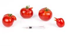 Tomater med deformering och defekter på vit bakgrund, med injektionssprutan royaltyfria bilder