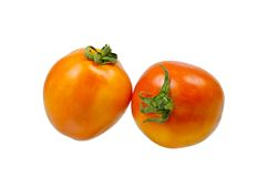 Tomater med reflex Fotografering för Bildbyråer