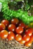 Tomater och basilika Arkivbild