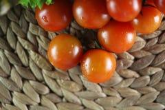 Tomater och basilika Royaltyfri Foto