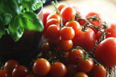 Tomater och basilika Royaltyfri Bild