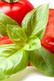 Tomater och ny basilika, closeup Arkivfoton