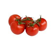 Tomater på en förgrena sig Fotografering för Bildbyråer