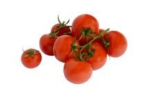 Tomater på en förgrena sig Royaltyfri Bild