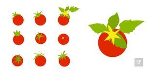 Tomater p? en vit bakgrundsupps?ttning r Olika tomater i sortiment med sidor och gula blommor kunna vektor illustrationer
