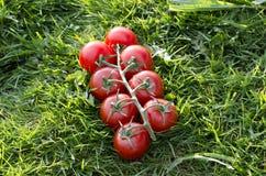 Tomater på ett gräs fotografering för bildbyråer