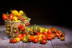 Tomater på korg Royaltyfri Foto