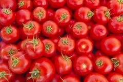 Tomater på marknad Arkivfoto