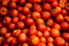 Tomater på marknaden Arkivfoto