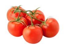 Tomater på vinen arkivbild