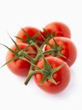 Tomater på vinranka Royaltyfri Fotografi