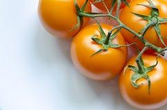 Tomater på vit Arkivbilder