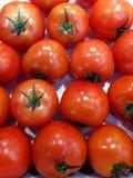 Tomater Röda mogna tomater på vit bakgrund Royaltyfri Foto