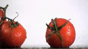 Tomater samla i en klunga i toppen ultrarapid som bevattnar vid små droppar arkivfilmer