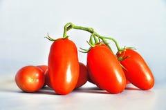 Tomater San Marzano, Campania, Italien Royaltyfri Bild