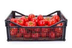 Tomater (Solanumlycopersicum) i plast- spjällåda Royaltyfri Bild