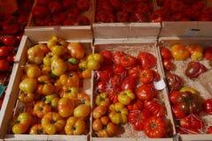 Tomater som är till salu i fransk marknad royaltyfri fotografi