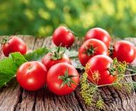 Tomater som lagas mat med örtar Fotografering för Bildbyråer